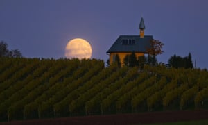 Biodynamic winemakers have been known to harvest by moonlight.