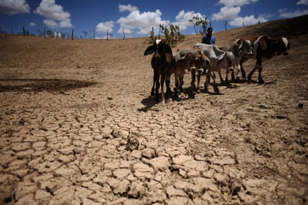 There is a huge lack of water and food for the animals, farmers say.