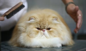 One of the study's findings was that cat people are more likely than dog people to express feeling tired, annoyed, sad or emotional.