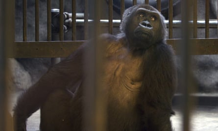 Bua Noi looks through the bars of her cage at Pata zoo, on the top floor of a shopping centre.