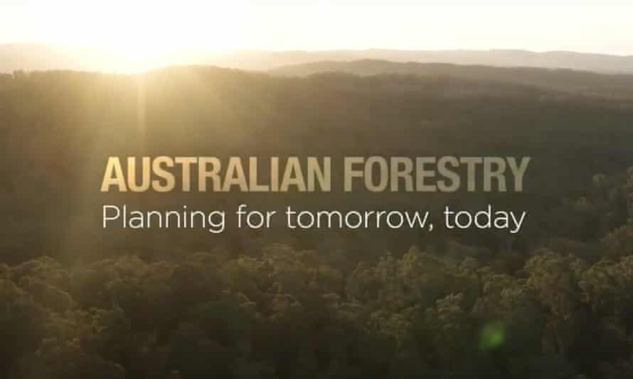 A screenshot from the department of agriculture video Australian Forestry: planning for tomorrow, today