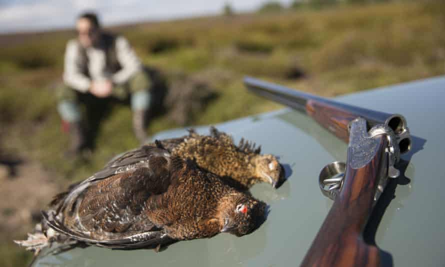 The RSPB is lobbying MPs to change the law rather than back a ban on driven grouse shooting.