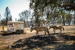 Horses walk past houses destroyed in the Clayton fire in Lower Lake, California