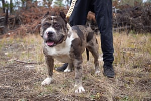 "British Columbia, CanadaAftermath, one of the rarest dogs in the world. The dog and his pups sell for upwards of $10,000 due to their unique, snow leopard-like technicolor patterning which is down to the fact he has the ""merle"" gene."