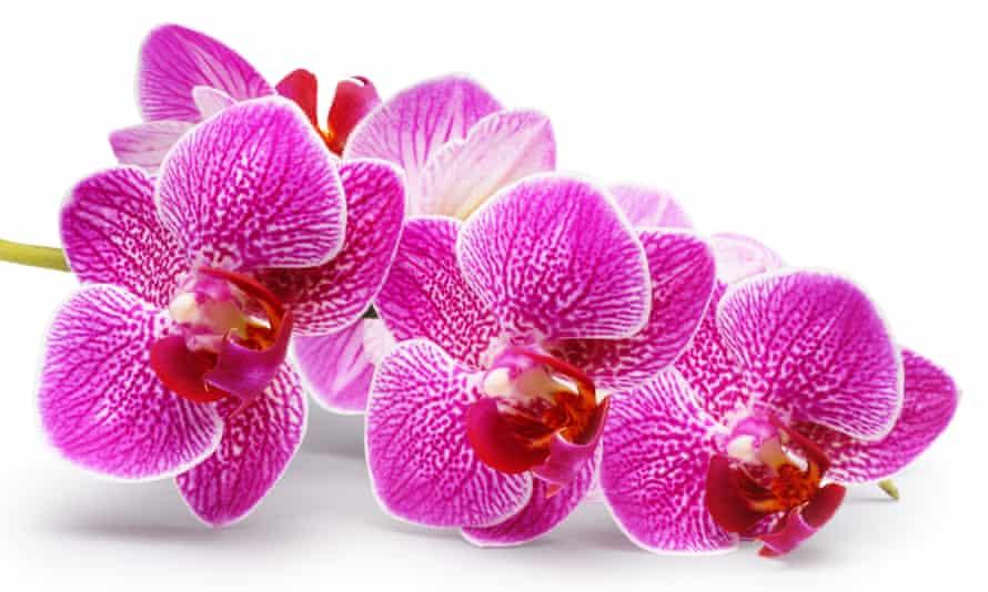 Hothouse flower: a John Gollop orchid.