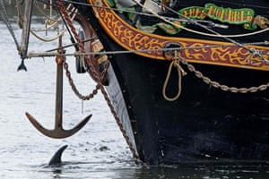 A dolphin spotted swimming around the port of Amsterdam is taken back to sea. The dolphin was piloted through the lock in IJmuiden by a sailing ship that he followed from Brittany, and was guided back to sea by two smaller boats.