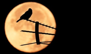 A birds stands on an antenna as the full moon sets in Rome.