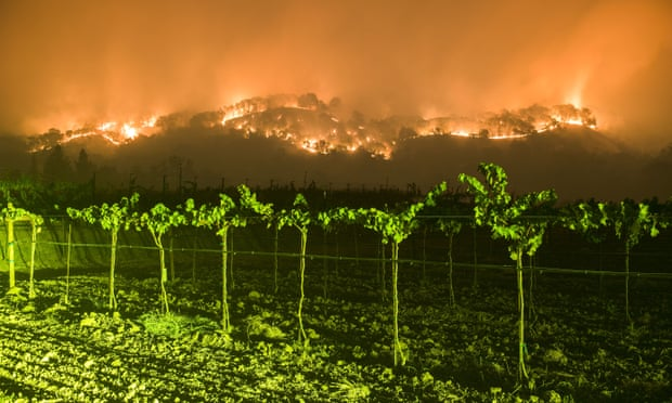theguardian.com - What climate change means for the wine industry
