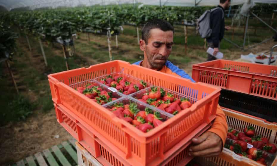 A Romanian man working on a farm in Faversham