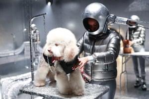 Milan, Italy. Dog grooming during the Moncler show at Milan fashion week