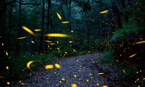 Fireflies are seen at the Santuario de las Luciernagas (Fireflies' Sanctuary) near Nanacamilpa, Tlaxcala, Mexico.