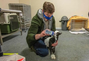 A staff member feeds a two-year-old wild Irish goat found on a mountain called Liam, in the new Irish Wildlife Rehabilitation Room, located behind the Tara on Ri pub, which was closed due to the Covid-19 pandemic, at Garlow Cross in front of Navan in County Meath, Ireland, February 18, 2021.