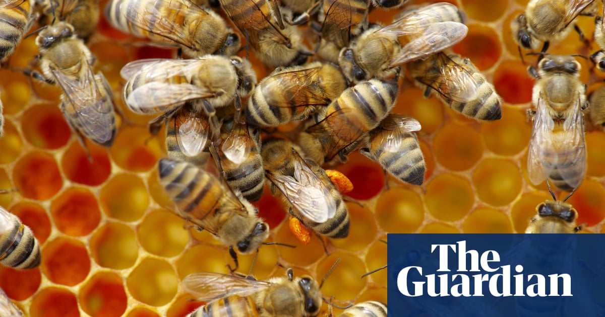 Invasion Of The Frankenbees The Danger Of Building A Better Bee