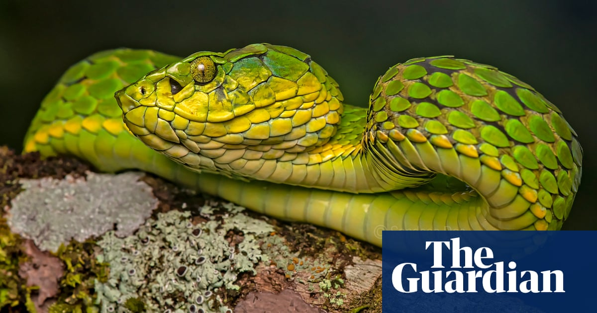 'Like Uber for snake emergencies': tech takes the sting out of bites in rural India