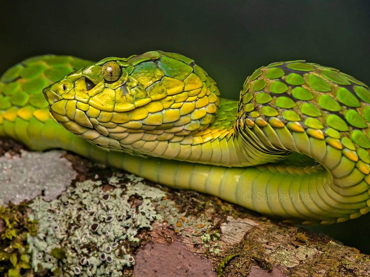 Snake Snake Boots