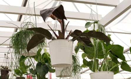 A collaboration between Ikea and Indoor Garden Design offers clever ways to display plants indoors, from space-saving hanging planters to planters on peg boards.