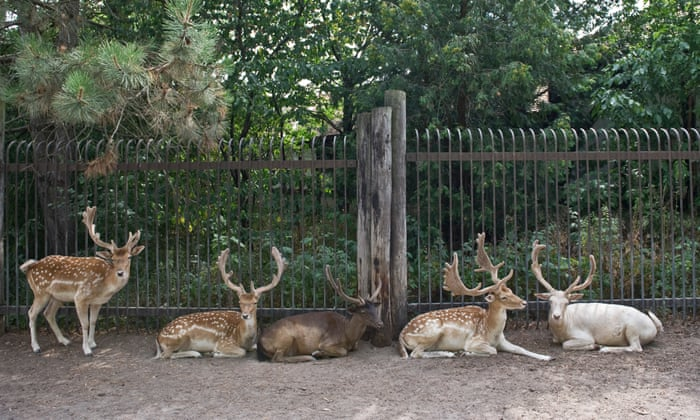 Calls for Canadian zoo to be shut down after deer die in