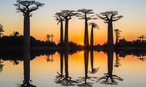 Baobab trees reflect in the water at sunset, Morondava, Toliara province, Madagascar