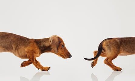Dog's tail.