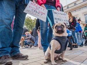 Pets and their owners at  protest