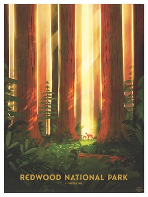 Redwood by Glenn Thomas
