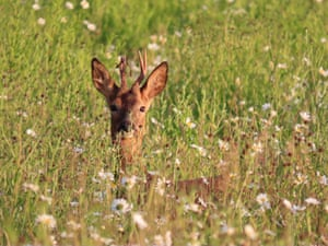 Summer Meadow Deer by Alex White