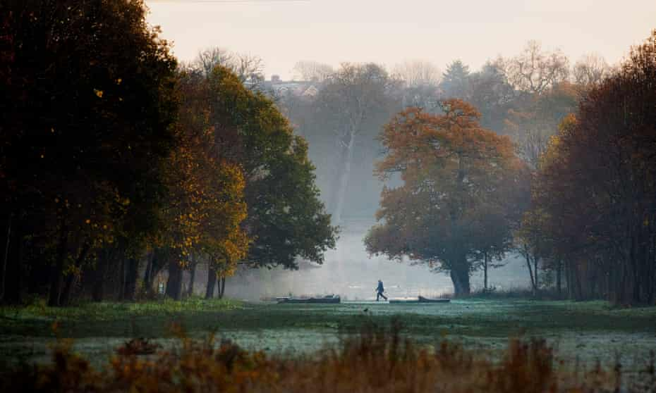 November, early morning in Epping Forest.