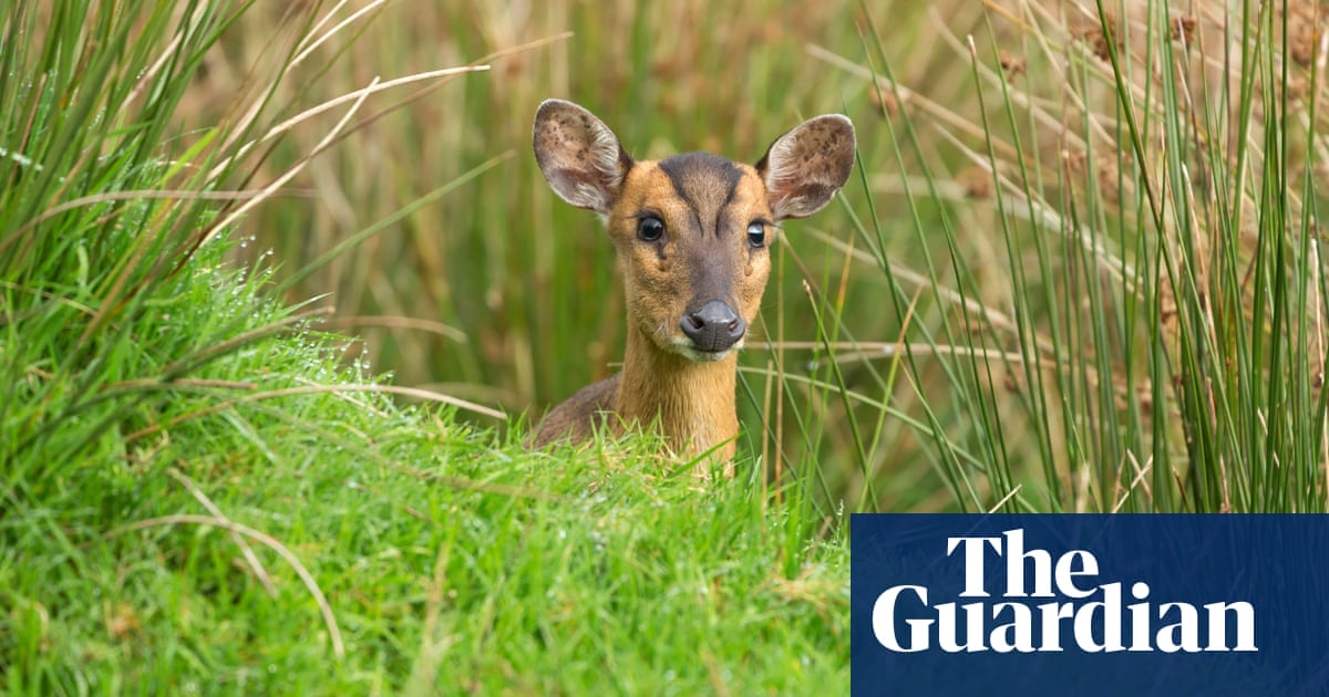 Secrets of the New Forest – and where to spot its elusive wildlife