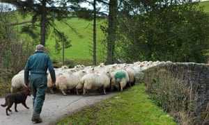 Michael Gove has said that tariffs would be used to protect British farmers in the event of a no-deal Brexit.