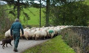 Sheep farming on Exmoor.