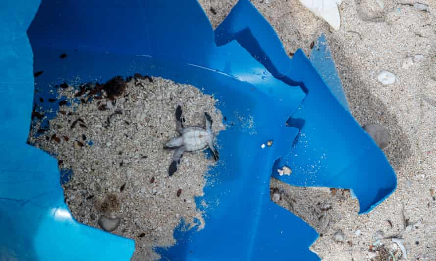 Plastic waste poses a danger to wildlife on Henderson island.