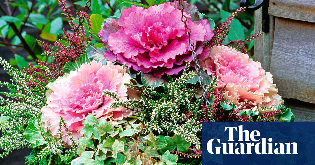 Alys Fowler: wonderful winter hanging baskets | Life and