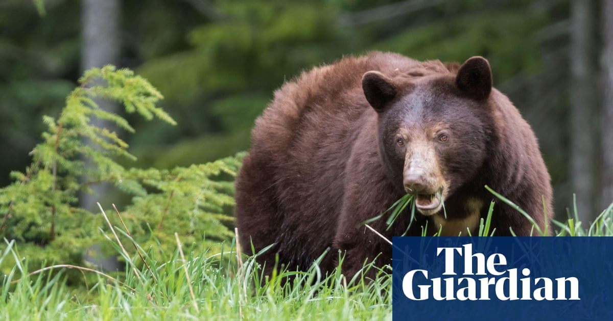 Bear kills man in Slovakia forest in what could be first fatal attack