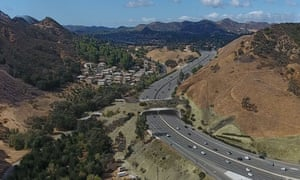 A wildlife corridor, the biggest in the world, is planned to extend over Highway 101 north-west of Lost Angeles.