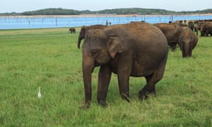 The elephants are drawn to water reserves in the park which are hard to find during the dry season