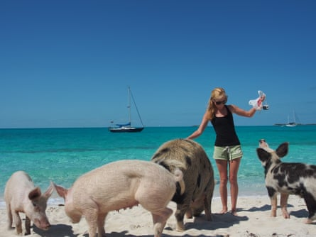 Kitiara Pascoe with some of the celebrated Bahamas pigs.