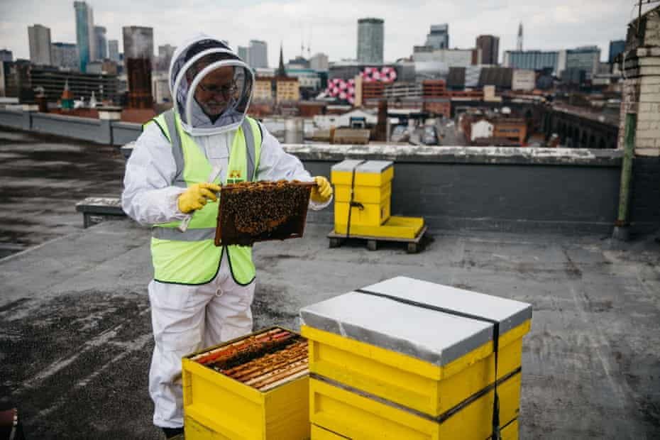 Tim Vivian inspects the beehives he keeps on top of the Custard Factory roof in Birmingham, where his office is based