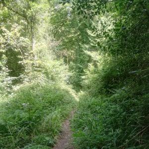 Narrow stony track among trees