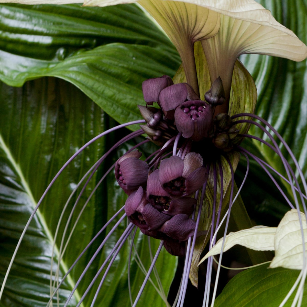 Amazing Exotics To Grow From Seed Gardening Advice The Guardian,New York Times Travel Ban To Europe