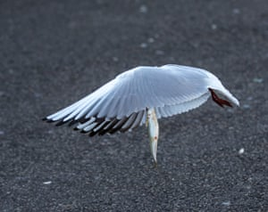 A seagull leaves with a prize from the local fish market in Ankara, Turkey