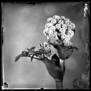 Just Hogweed: Peter Eleveld, the Netherlands