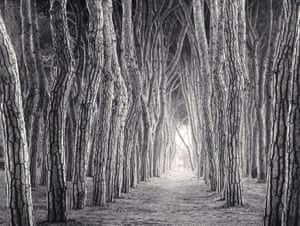 Timber! Michael Kenna's magical trees – in pictures | Art