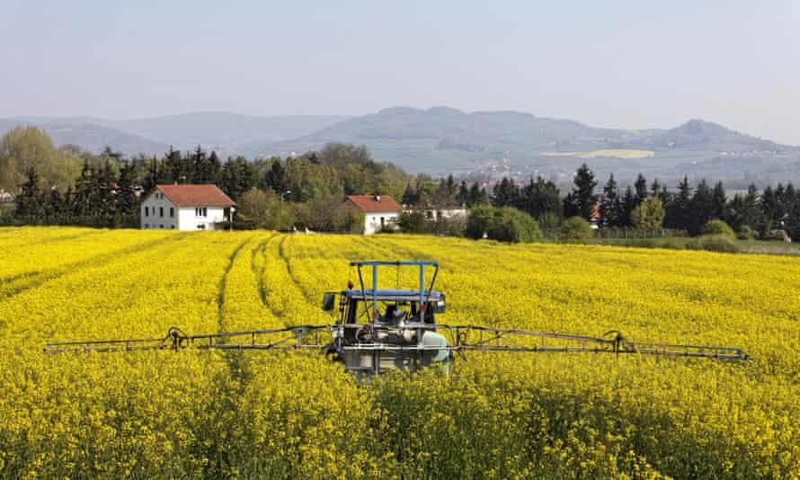 Agricultural chemical treatment on rape field near houses, France.