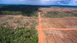 Oil palm plantations in Papua