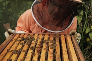 'Hive inspection at Baytrees Bee Project based in North Manchester.'