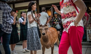 Nara's free-roaming deer have become a huge attraction for tourists