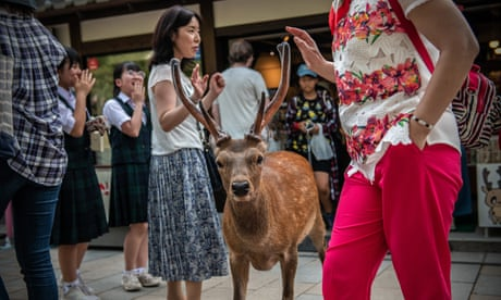Japan's famous Nara deer dying from eating plastic bags