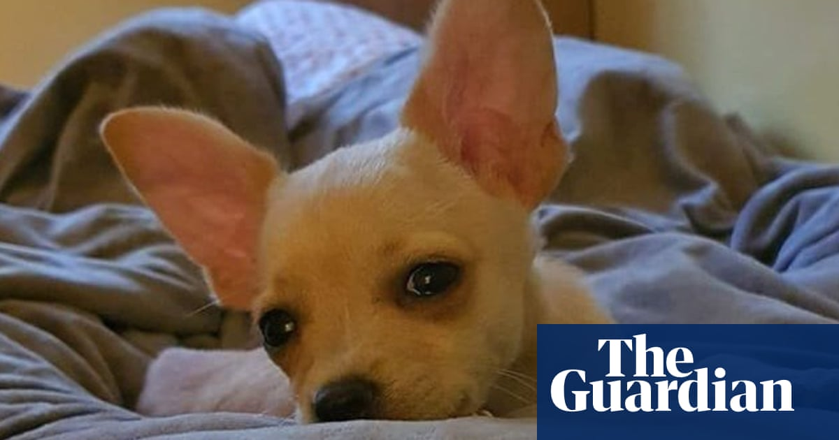 Van Damme saves life of chihuahua after row over fake passport
