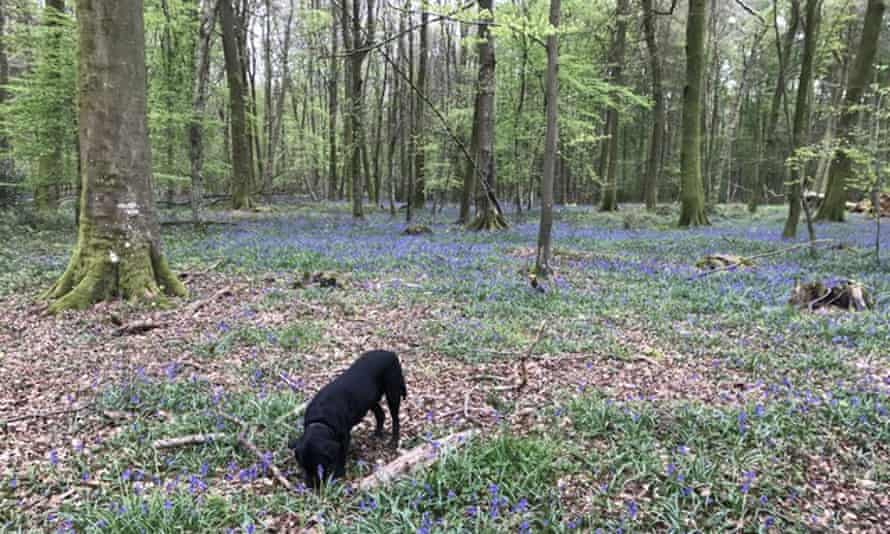 dog in the foret d'eu