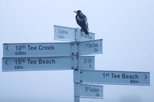Geelong, AustraliaA Magpie is seen during Day one of golf's ISPS Handa Vic Open at 13th Beach Golf Club.